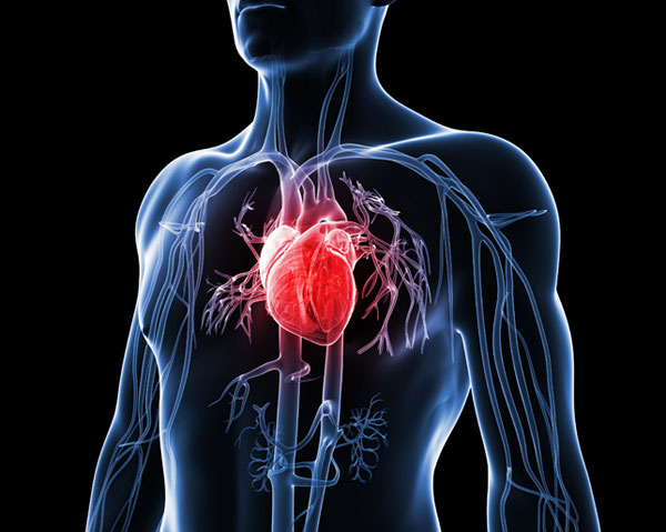 heart disease: a common killer, Skeleton
